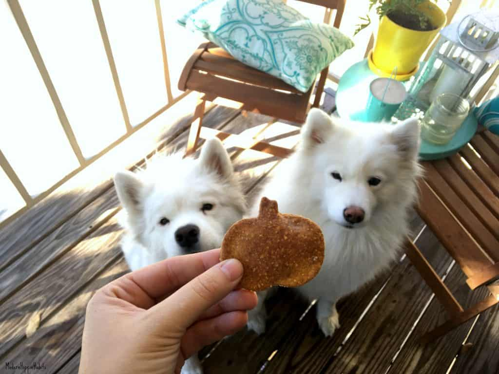 Pumpkin Chia Dog Treats