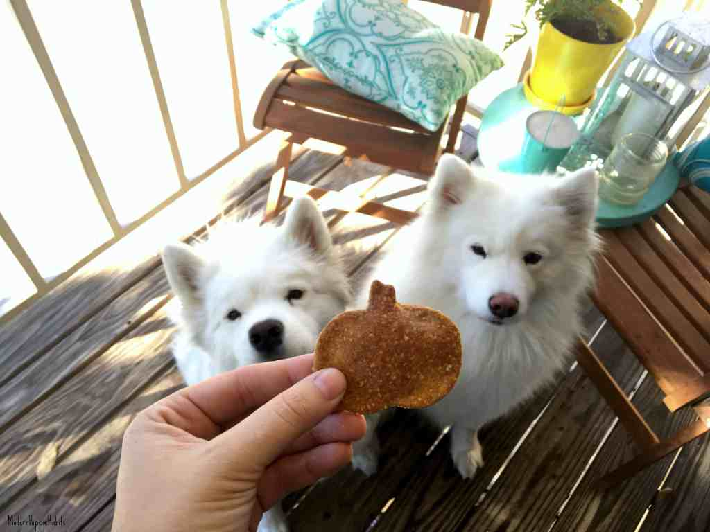 Pumpkin Chia Dog Treats
