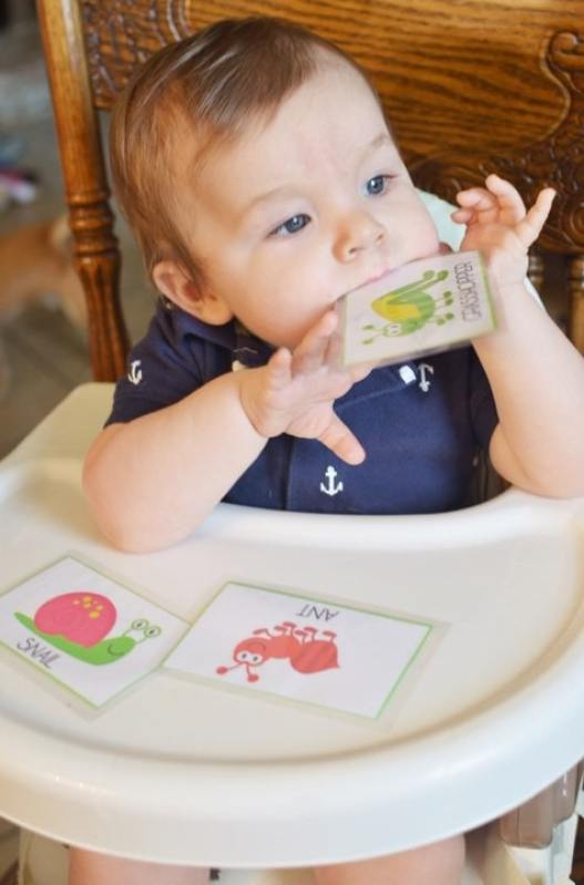 Bug Theme Toddler Flashcards