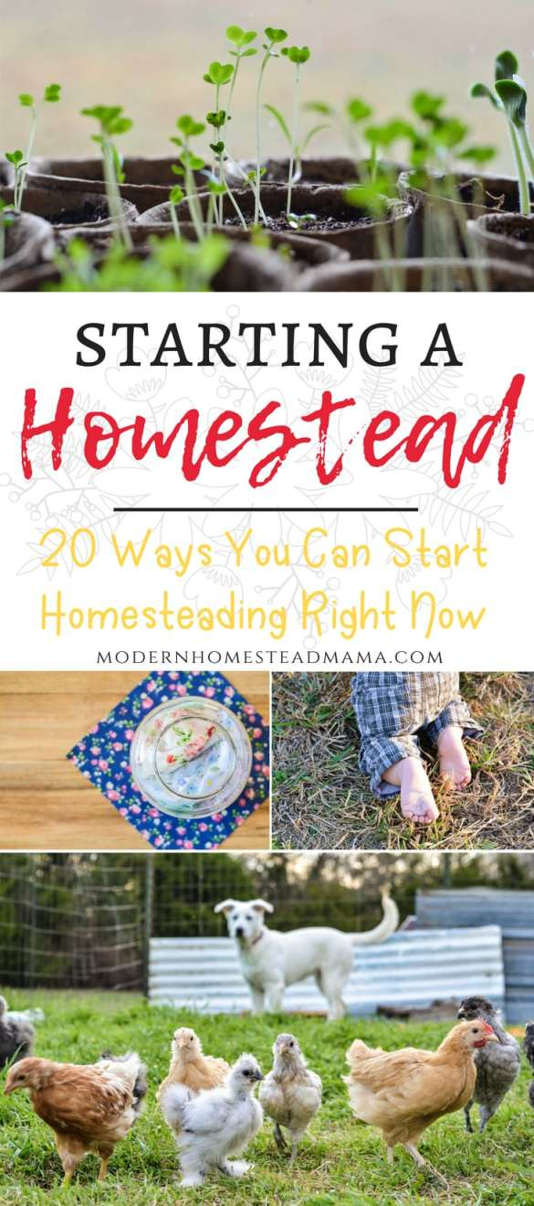 Starting A Homestead - 20 Ways You Can Start Homesteading Right Now