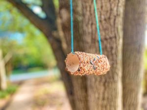 Toilet Paper Roll Bird Feeders