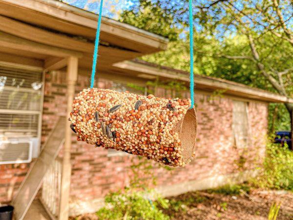 Toilet Paper Roll Bird Feeders