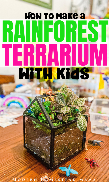 How to Make a Rainforest Terrarium with Kids | Modern Homestead Mama