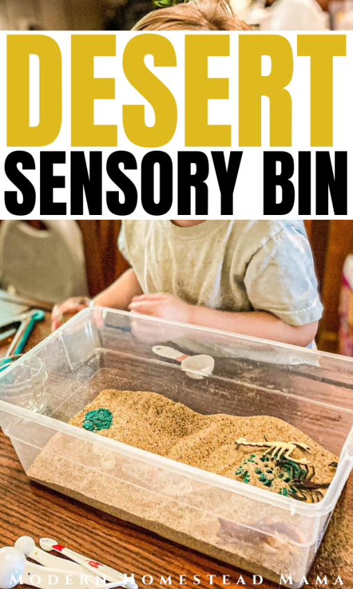Desert Sensory Bin Activity for Preschoolers | Modern Homestead Mama