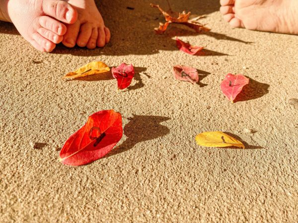 Autumn Leaf Name Recognition Activity