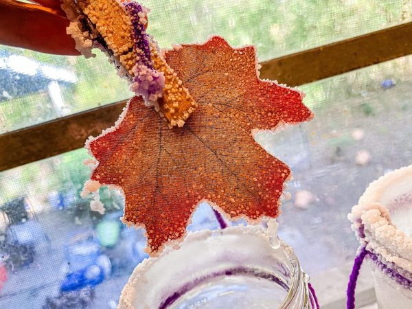Salt Crystal Fall Leaves Science Experiment for Preschoolers