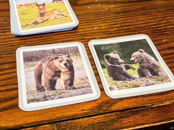 Animal Parents & Babies Montessori Cards