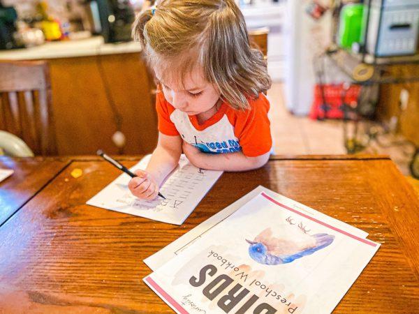 Bird Workbook for Preschoolers