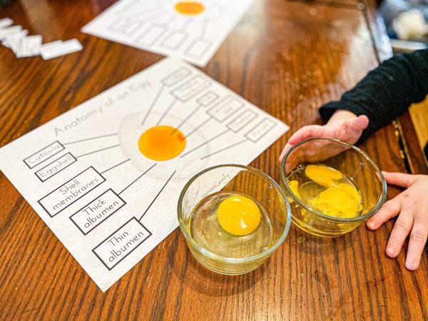 Egg Anatomy - Bird Nature Study