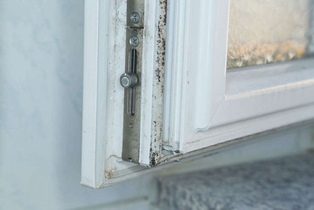 how to clean mold from windows naturally