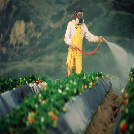 12_pesticide_1_900x900.jpg