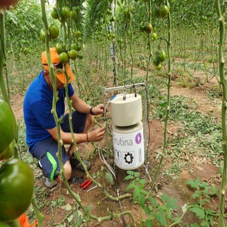 3.kep_Trutina-irrigation-system-implementation-on-a-tomato-farm-1024x768_900x900.jpg