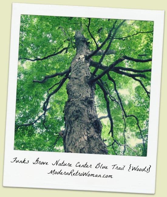 FunksGrove Nature Center Blue Trail Woods ModernRetroWomancom