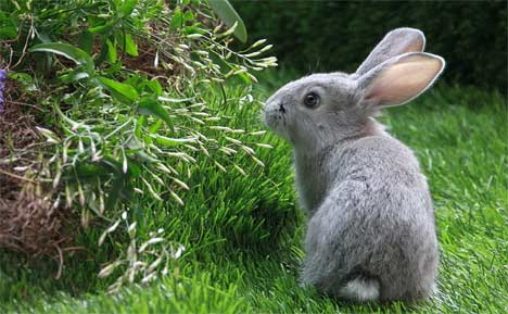 How To Rid Rabbits From Your Garden - Space Coast Preppers.com