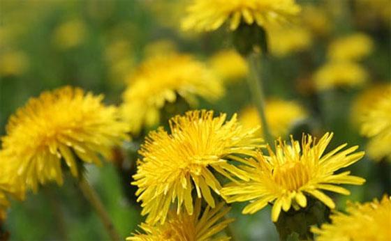 3-common-edible-plants