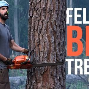 Felling a Big Tree | Forest to Farm