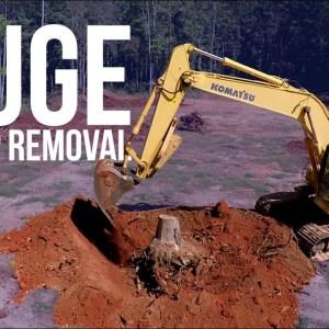 FTF   Huge Stump Removal