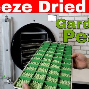 Freeze Dried Garden Peas -- Freeze Dry Your Vegetables!