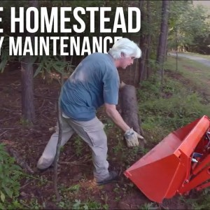 Cleaning Up a Neglected Property | Forest to Farm