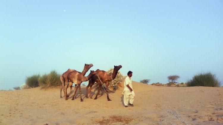 Jaisalmer - A Desert Safari
