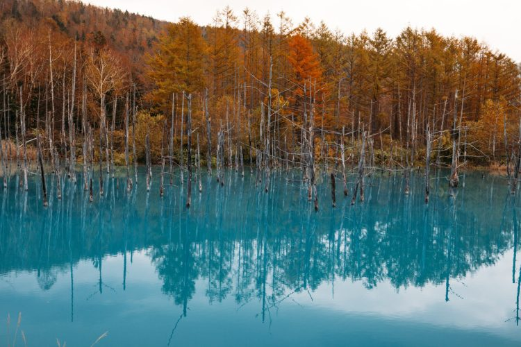 Blue Pond in Hokkaido, Winter Wonderlands To Visit