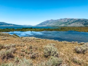 A wide-angle view of Henrys Lake at the inlet to the lake, from hiking trails that lead out from Idaho's Henrys Lake State Park. Reeds and other marshland vegetation grows in the foreground, and the Targhee National Forest and mountain range are visible in the distance.
