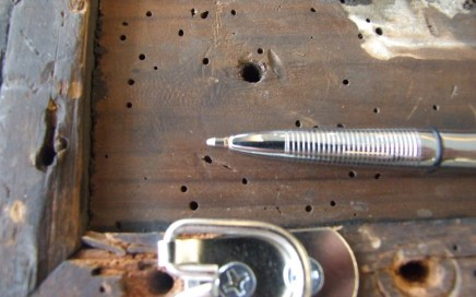 Borer holes to wood