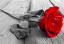 O ruži a starenke