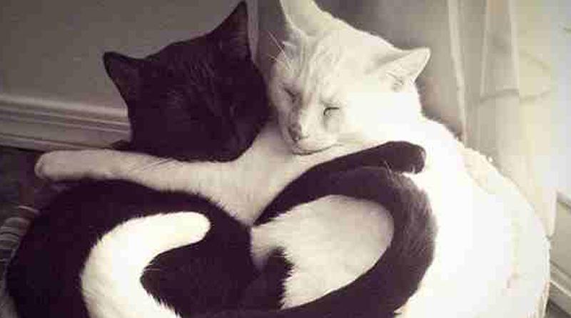Veľmi čierna mačička pics