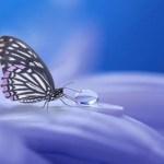 Motýlia terapia
