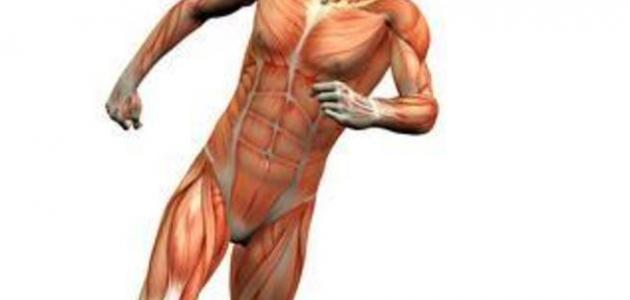 العجائب السبعة في جسم الانسان موضوع