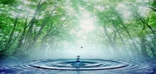 اهمية الماء للانسان والحيوان والنبات.