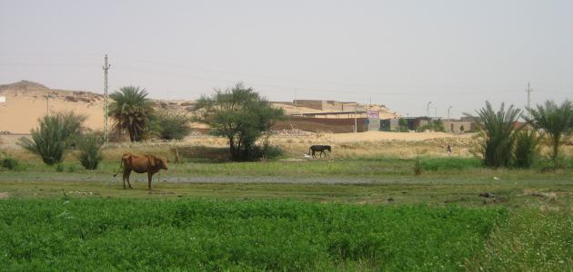 أهمية الزراعة فى مصر موضوع