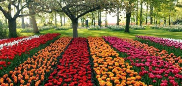 وصف الطبيعة في فصل الصيف موضوع