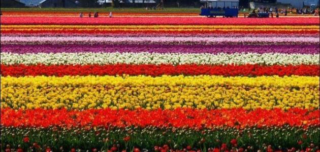 موضوع تعبير عن فصل الربيع موضوع