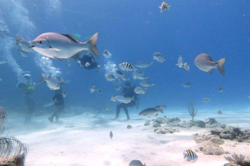 Aquanautas