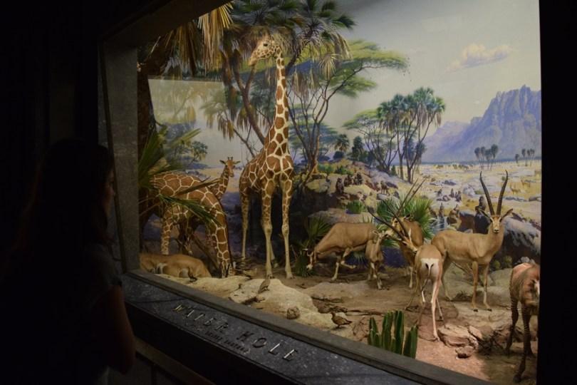 Museu História Natural - Nova York - Animais