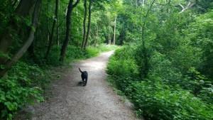 Achtertuin - plekje voor onze honden in bijzonder Luna