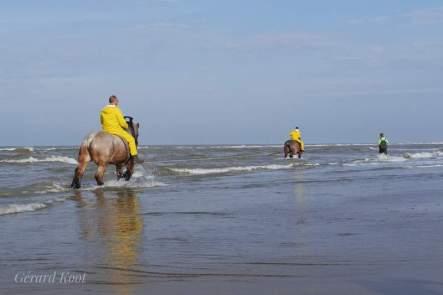 Paard in zee Foto: Gerard Koot