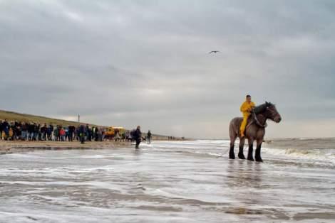Zeepaard en strand Foto: Petra v Went