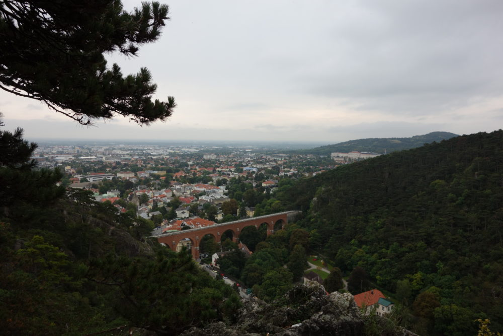 Stadt und Dschungel