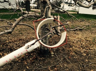 """The """"wicket"""" used to place the mating disruption loops in the apple trees."""