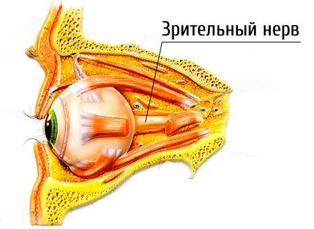 a látásért felelős idegek