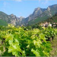 Wijn wandeltochten en uitjes in de Languedoc