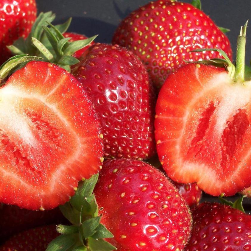 Jordbær malwina