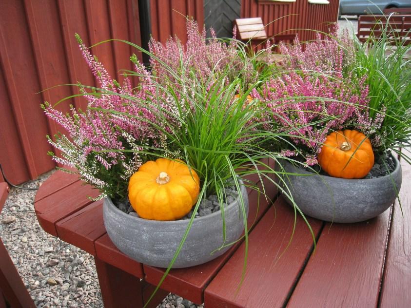 sammenplantning med lyng, græs og græskar
