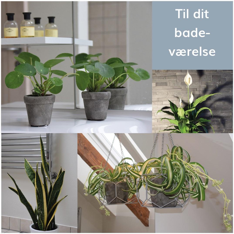 planter til badeværelse