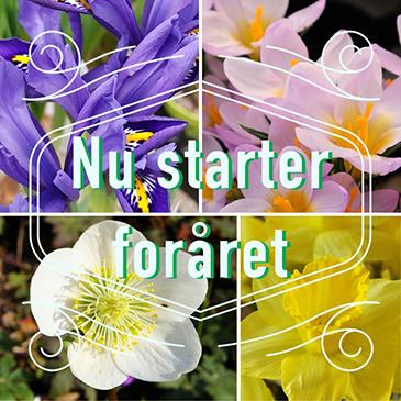 Foråret er startet hos Moesgård Havecenter
