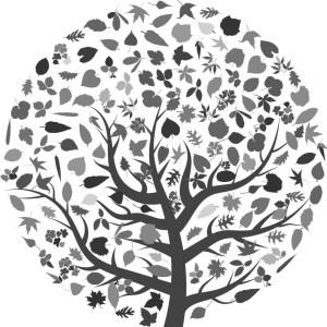 Prunus Kleopatra Kirsebærlaurbær