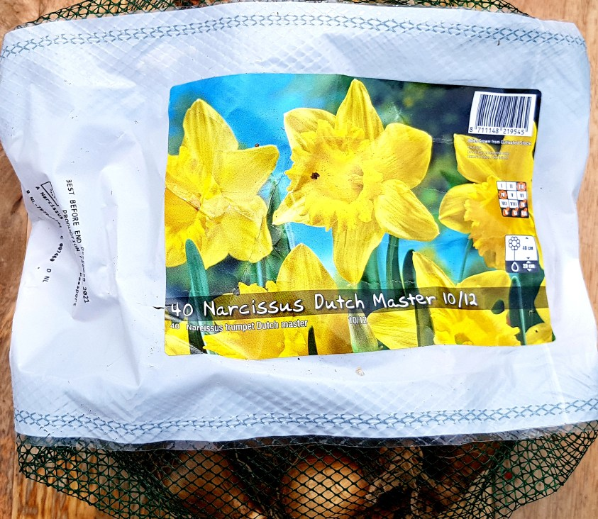 foraarsloeg Narcissus Dutch Master